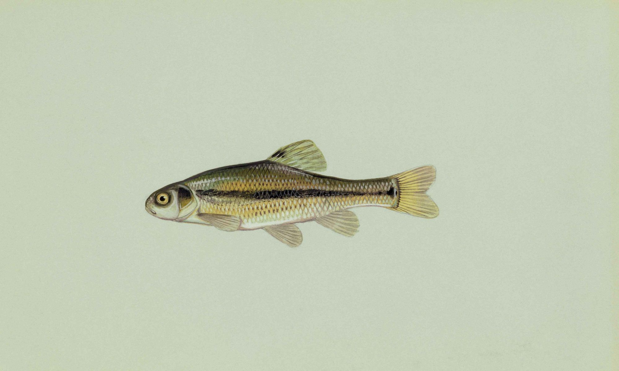 The Art Minnow